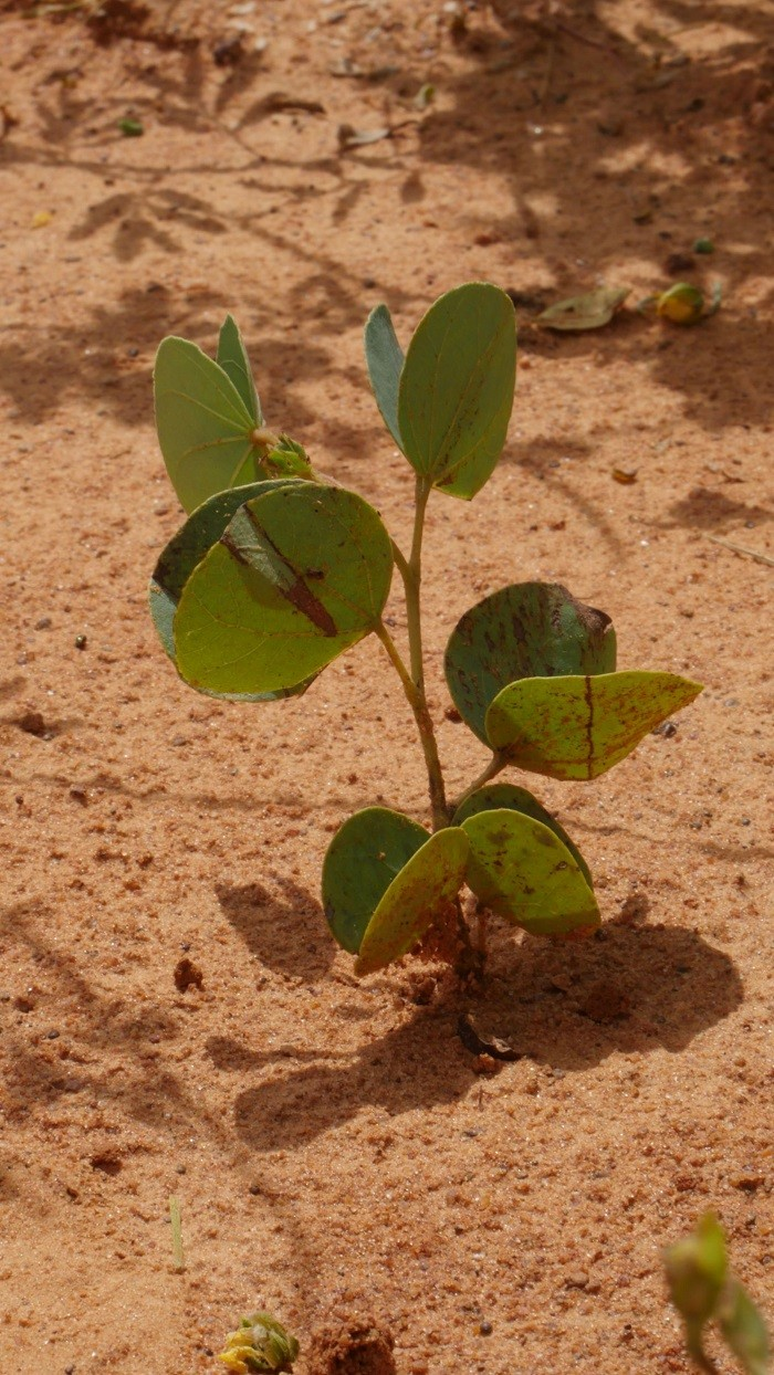 Ecosia, die grüne Suchmaschine