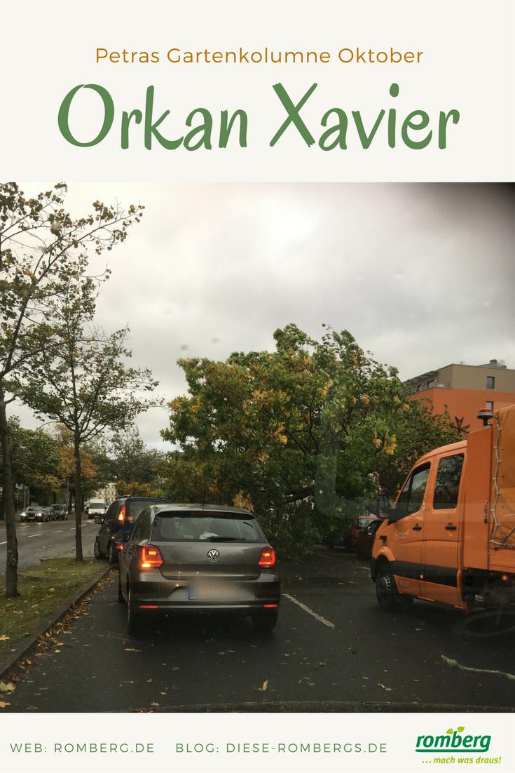Umgestürzter Baum in Berlin-Tegel