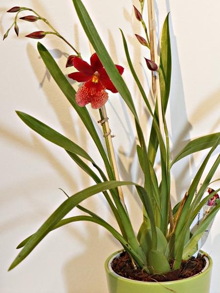 Praxistest Orchideensubstrat Romberg