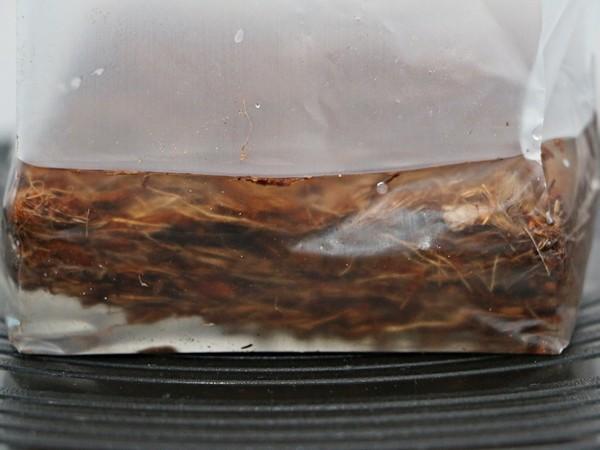 Gibt man das Wasser in den Beutel fängt das POP UP Substrat an aufzuquellen.