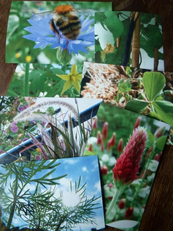 Fotos aus dem Balkongarten.