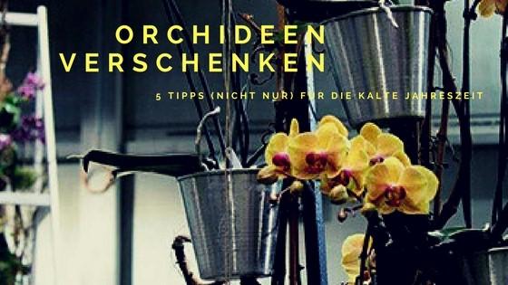 Orchideen verschenken Banner