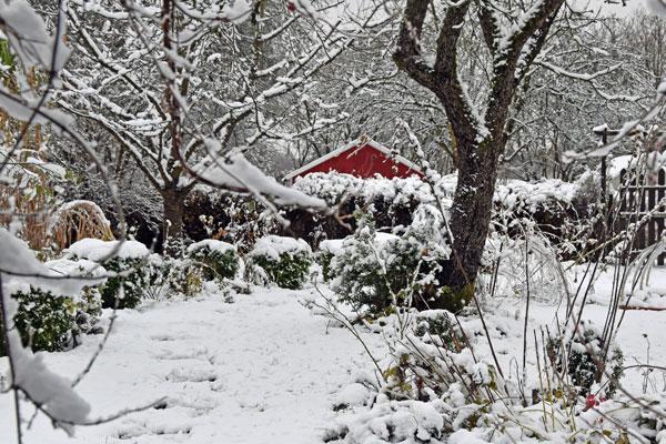 Mein Garten in einem Schneereichen Winter - Foto © Malgorzata Ackermann