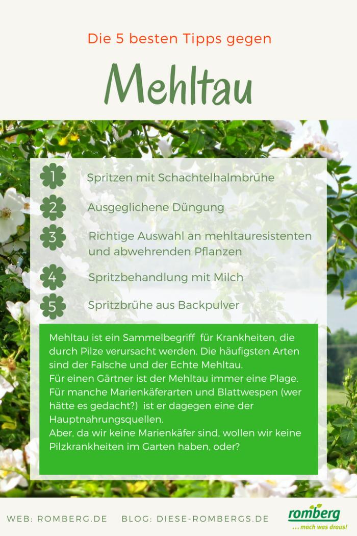 Romberg_Blog
