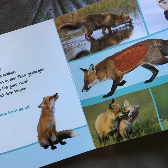 Das Tiergeräuschebuch von Miss Kleinkind brachte Klarheit über den Ursprung des nächtlichen Lärms. Foto: Petra A. Bauer 2018