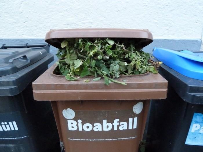 Tomatenpflanzen in der Bio-Müll-Tonne