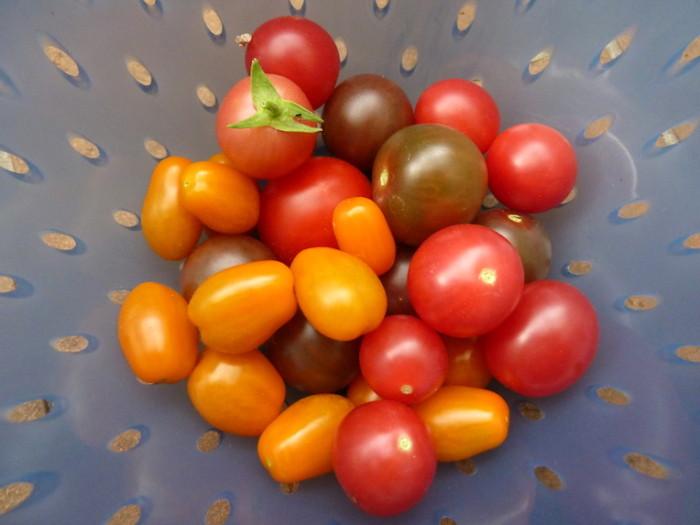 Tomaten in einem blauen Sieb