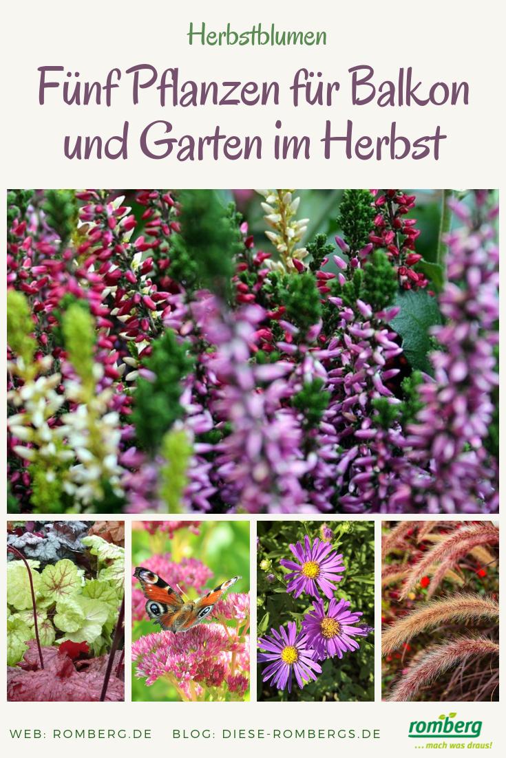 Herbstblumen Diese Funf Pflanzen Bringen Balkon Und Garten Zum Leuchten