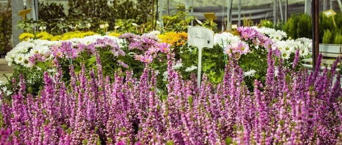 Lust, noch mal zu pflanzen? Der Handel bietet auch im Herbst ein farbenfrohes Sortiment. Foto: Pixabay/PactoVisual