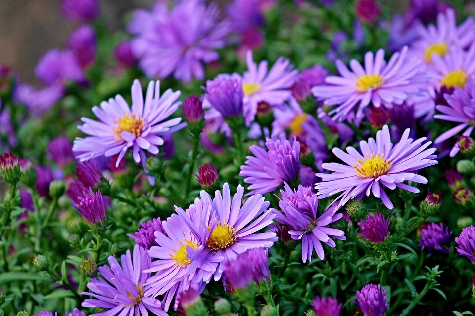 Herbstblumen Diese Funf Pflanzen Bringen Balkon Und Garten