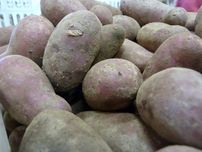 Kartoffeln der Sorte Rote Emmalie