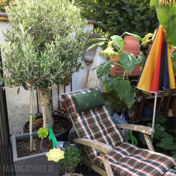 Olivenbäume im Bauerngartenfee-Garten. Foto: Petra A. Bauer 2018.
