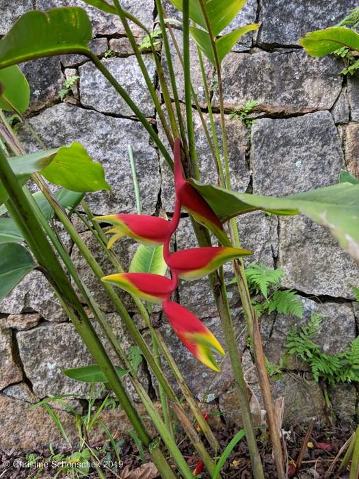 Florale Reiseimpressionen aus Südbrasilien