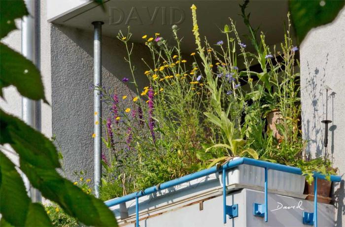 Wildblumen statt Geranien. Auch auf dem Balkon gedeihen farbenfrohe Nahrungspflanzen. Foto: W. David