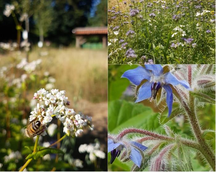 Es gibt immer weniger Insekten. Ein Grund: Das Fehlen geeigneter Nahrungspflanzen. Fotos: I.Rieken/Befis Naturgarten