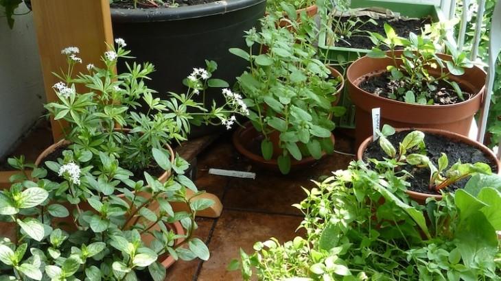 Checkliste: Was du für einen Mini-Garten brauchst