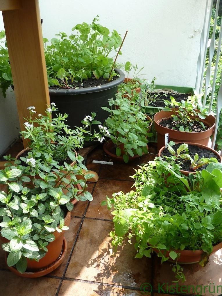 Blumentoepfe krauter %c2%a9melanie oehlenbach kistengruen