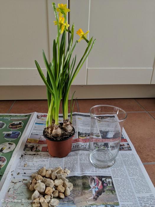 Blumenzwiebeln, Glas, Deko, Narzissen,