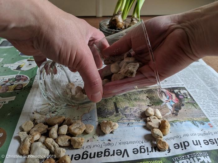 Blumenzwiebeln, Glas, Deko, Narzissen, Kieselsteine,