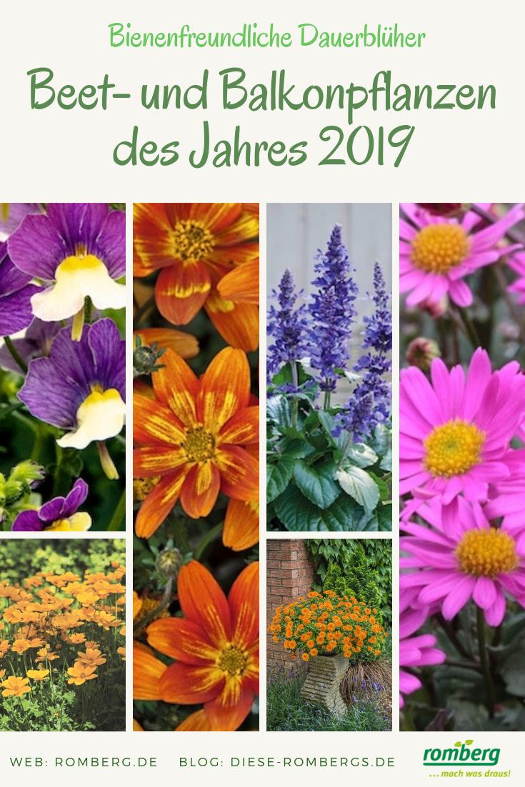 Prächtig Regionale Beet- und Balkonpflanzen des Jahres 2019 | Diese Rombergs &GK_93