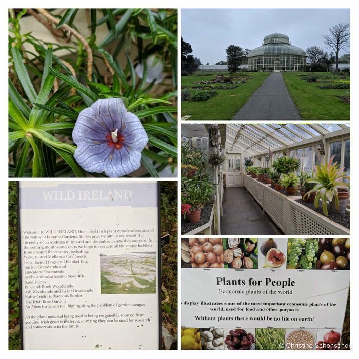 Botanischer Garten, Botanical Garden Dublin,