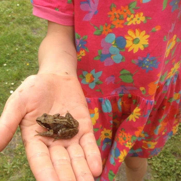 Schmetterlinge, Libellen, Igel, Frösche. In einem naturnahhen garten gibt es viele Tiere zu entdecken. Foto: R.Leemhuis