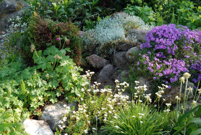 Mein Steingarten im Frühling