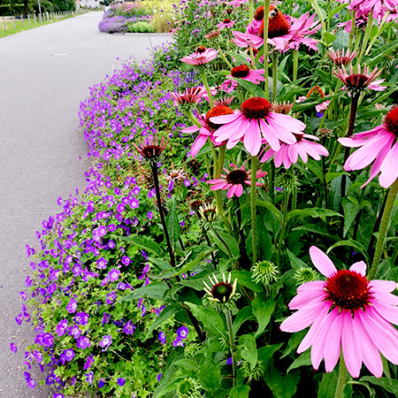 Voll in Blüte ist die Blumenwiese nicht nur für Insekten, sondern auch für uns Menschen eine wahre Pracht. Foto: Stefanie Haza