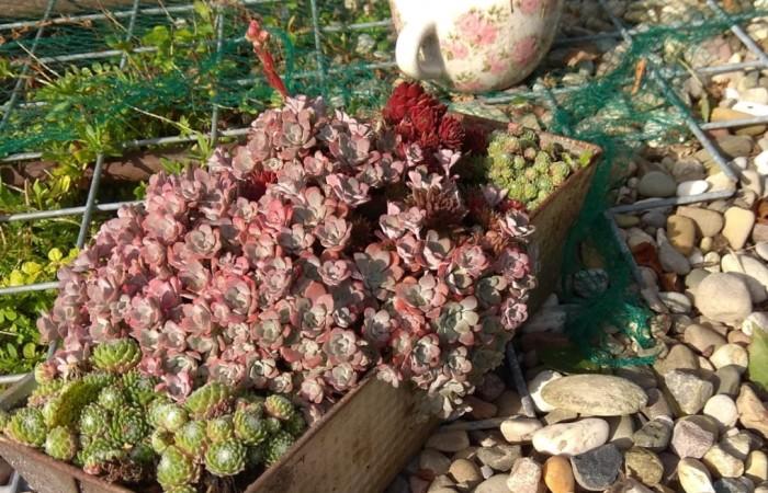 Ausrangierte Küchenutensilien sehen toll aus, wenn Du sie bepflanzt. Fito: R. Leemhuis