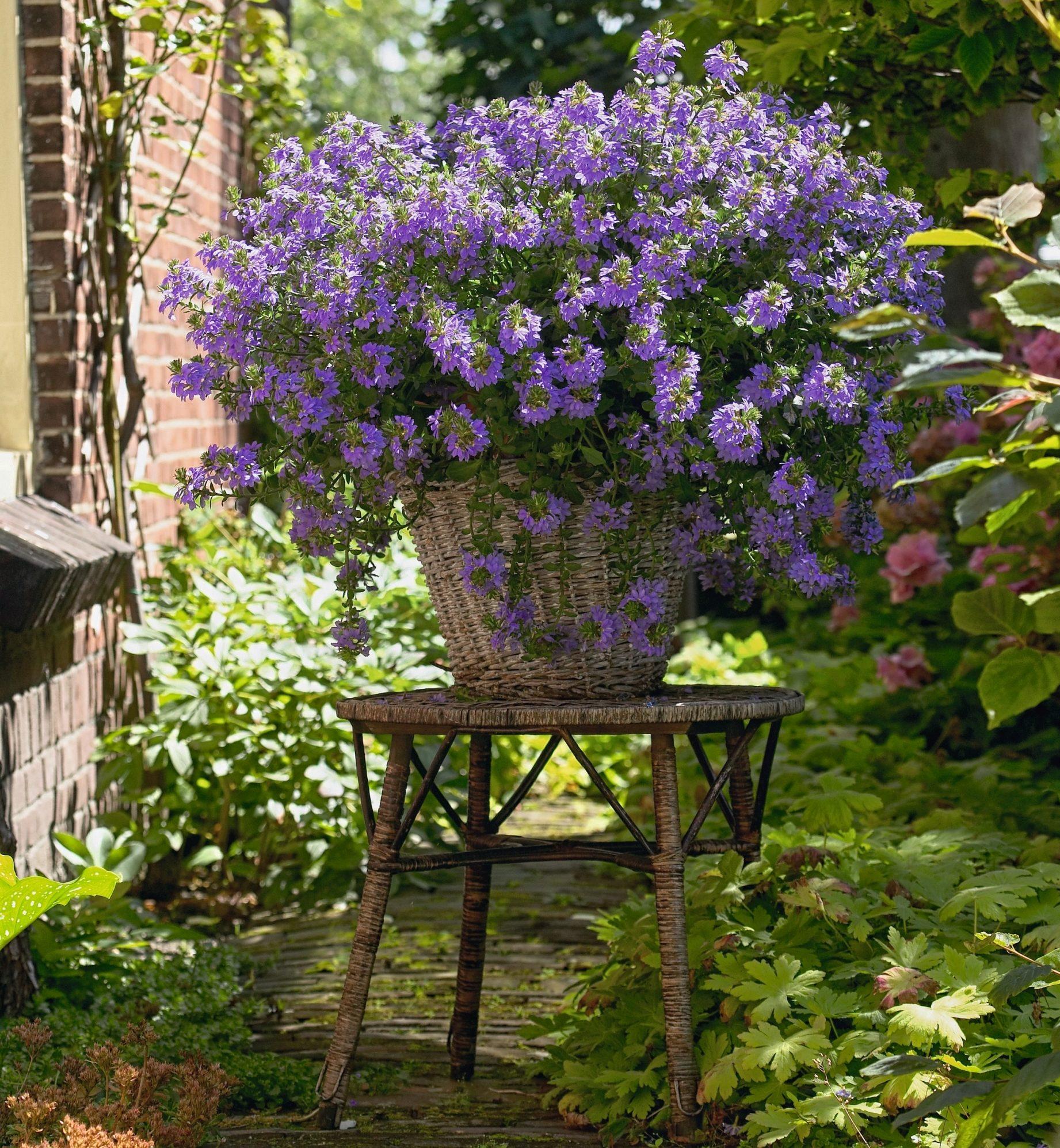 Jetzt Bluht S Blau Balkonpflanzen Des Jahres 2020